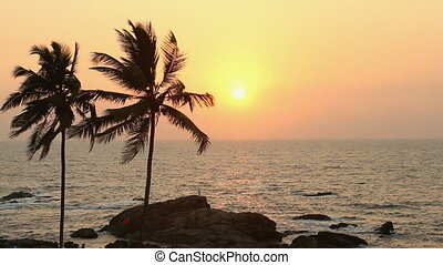 India Goa Vagator beach February 20, 2013. Palm Trees...