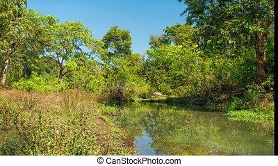 india., kanha, rzeka, narodowy park, krajobraz, drzewa., las
