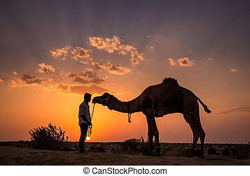 Indian camel sunset