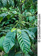 Indian Coffee Plantation - South Asian coffee plantations ...