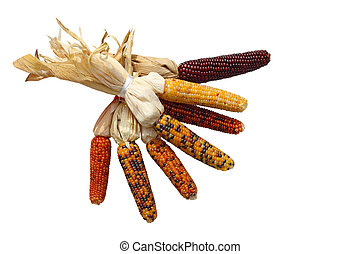 Indian Corn Bundle - Bundle of indian corns isolated on...