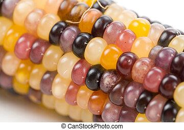 Indian corn close up shot