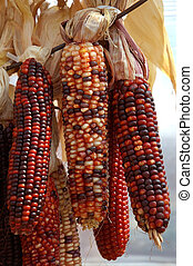 Decorative colorful dried corn used for fall decorating.