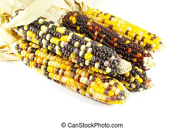 Indian Corn Isolated on a White Background