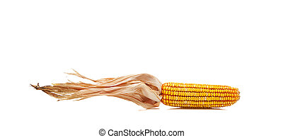 Indian corn on a white background