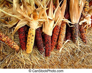 Stalks of dried indian corn on a bale of hay