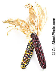 Indian corn - Two cobs of indian corn isolated on white ...