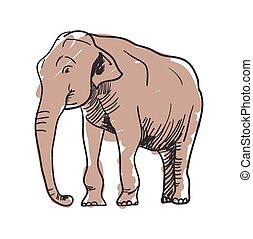 Indian elephant hand drawn icon