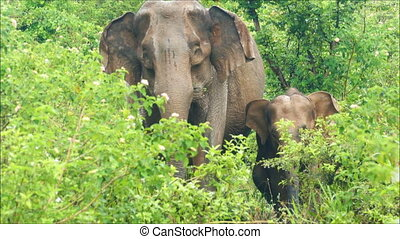 indian elephants family in jungle