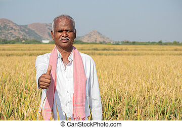 Indian Farmer with Thumps up gesture standing in middle of harvested Crops - concpet of good or bumper crop yields showing with copy space on agriculture farm land