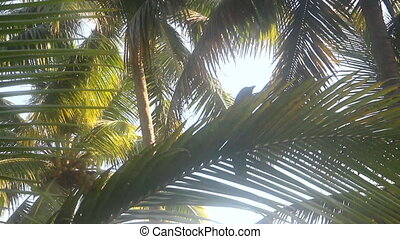 Indian house crow among palm fronds.