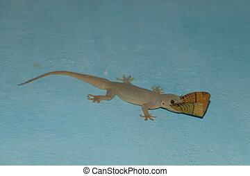 indian house lizard eat moth