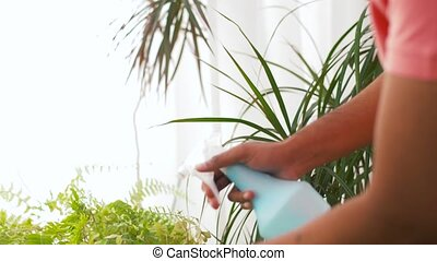 indian man spraying houseplant with water at home - people,...