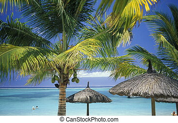INDIAN OCEAN MAURITIUS BEACH - palmtrees on a beach on the...