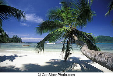 INDIAN OCEAN SEYCHELLES PRASLIN BEACH - a Beach on the coast...
