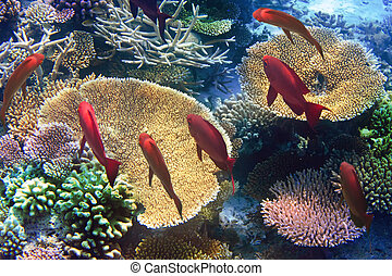 Indian ocean. Underwater world.