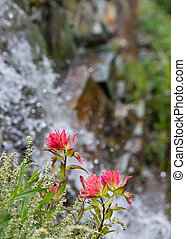 Indian Paintbrush Flowers Bloom on Cliff Side