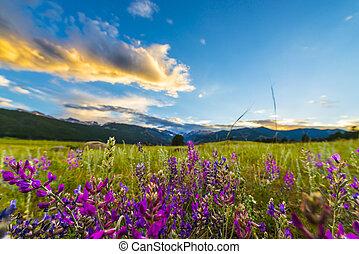 Indian Paintbrush flowers Colorado Landscape