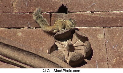 Indian Palm Squirrel sitting on ornamental house wall, India