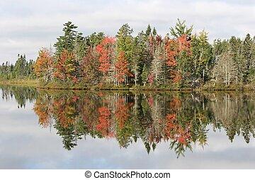 Foliage at a quiete lake