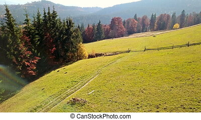 Indian summer in the Carpathians. Autumn mountain landscape. Aerial view