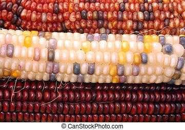 Indiana corns