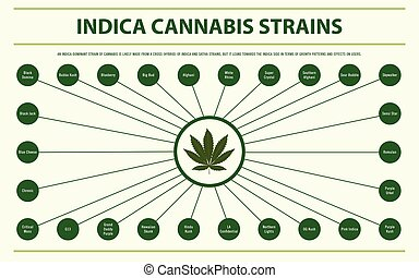 Indica Cannabis Strains horizontal infographic Complete