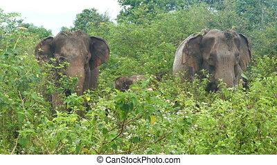 indien, jungle, famille, éléphants