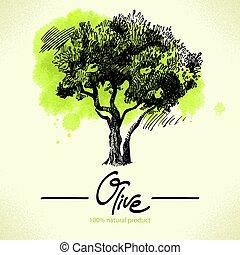indietro, illustrazione, mano, acquarello, oliva, disegnato
