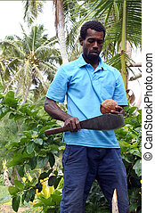 indigeno, fijian, uomo, è, circa, aprire, uno, palma noce cocco, frutta, in, figi