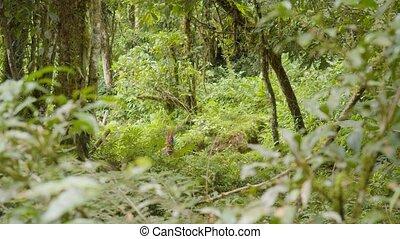 Indigenous Warrior Running Through The Amazon Rainforest In ...