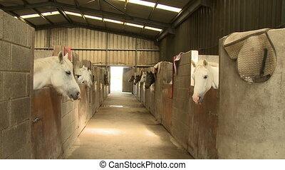 individu, écurie, chevaux, box