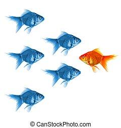 goldfish - individual success winner outsider boss or...