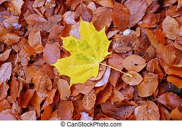 individualista, autunno