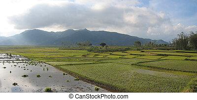 indonésie, ciel, ruteng, panorama, nuageux, flores, ricefields, cara