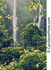indonesia., 島, バリ, sekumpul, 滝, 緑, rainforest