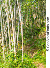indonesia., liget, reggel, erdő, zöld, napvilág, bambusz, sulawesi