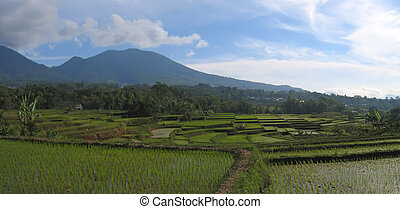 indonesia, ruteng, panorama, ricefields, flores, cara