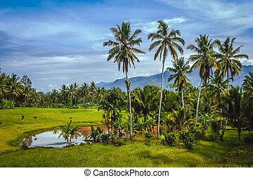 Indonesian tropical landscape