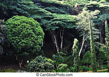 indonesie, bomen