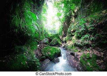 indonesien, wild, dschungel, geheimnis, landschaftsbild