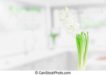 Indoor flower in a kitchen