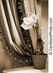 flower on a background of curtains - indoor flower on a ...