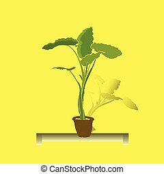 Indoor flower, tall with wide green leaves, in a pot, on a stand, on a yellow background,