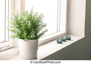 Indoor plant in a bathroom window - High resolution photo in...