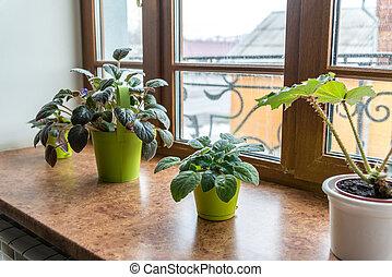 indoor plants in pots on  windowsill