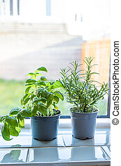 basil and rosemary in pots on a window sill