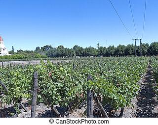industria de vino, en, chile