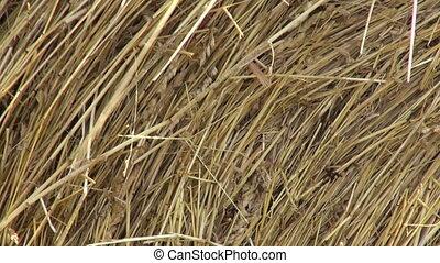 Industrial haystacks in the field