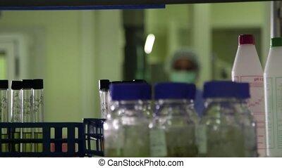 Industrial lab job, staff, woman